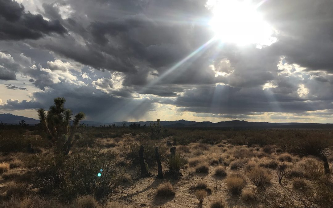 Mohave National Preserve, CA, 9/30